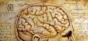 Amazing Brain by M. Hess